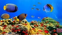 sfondi mare e pesci 20