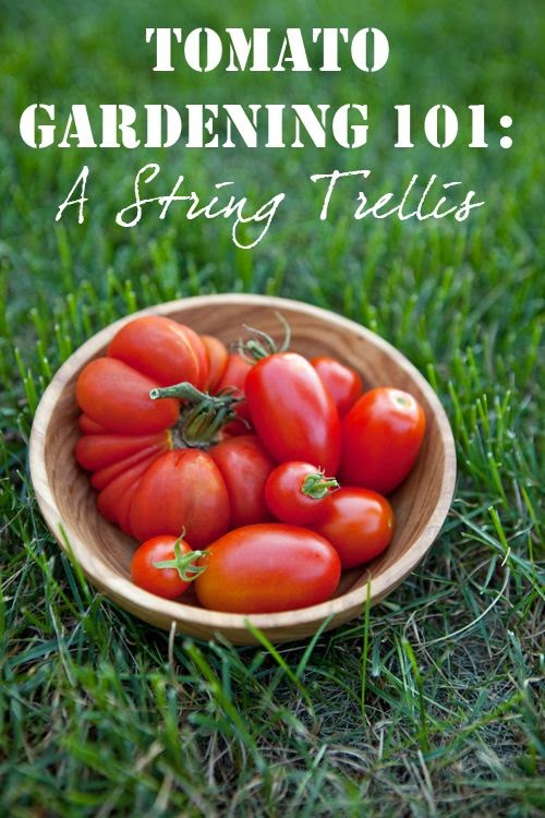 Tomato #Gardening 101: Tips for Growing Perfect Tomatoes