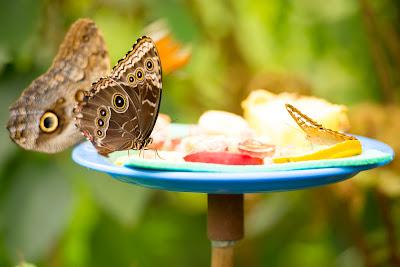 Falter im Schmetterlingshaus EGA Erfurt by Michael Schalansky