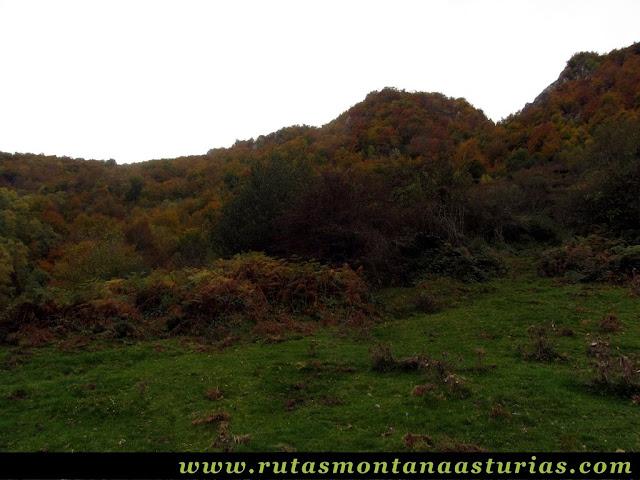 Circular Coañana Saleras: Pradera y bosque de hayas