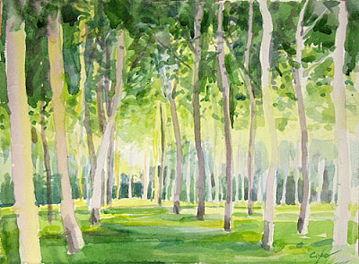 watercolour of a poplar grove by adam cope