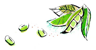 lima beans clip art digital