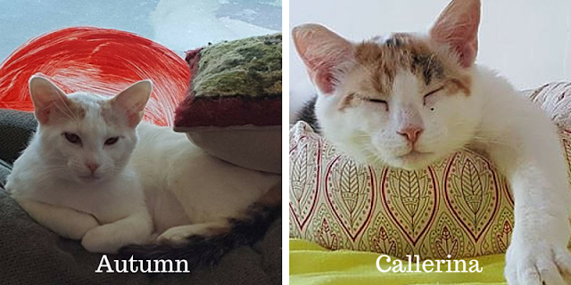 Callerina and Autumn love to nap in the cat room