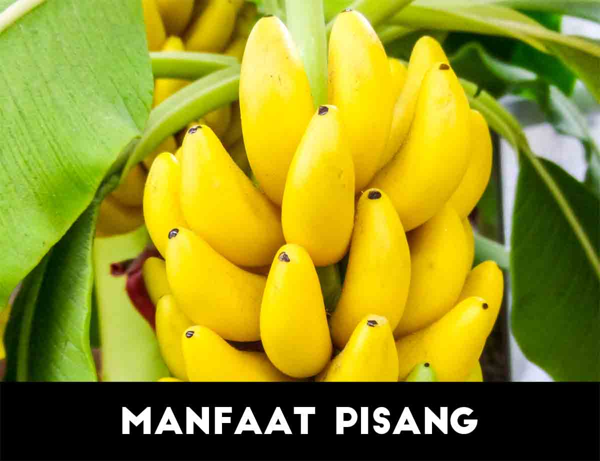 Kandungan buah pisang untuk kesehatan dan kecantikan