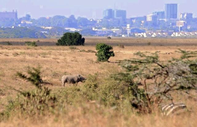 NAIROBI OP DE RAND VAN DE WILDERNIS