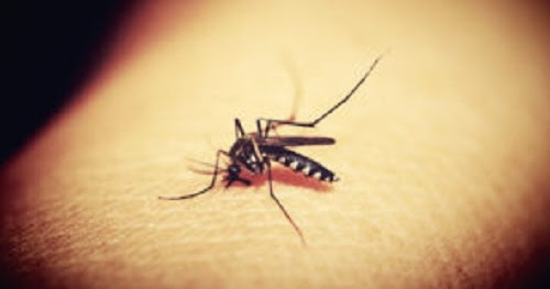 How To Use Safe Mosquito Repellent For Pregnancy