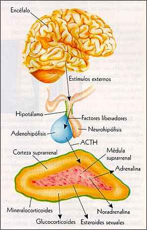 Tipos de metabolismo mayores problemas