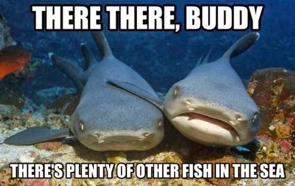 30 Funny animal captions - part 21 (30 pics), captioned animal pictures, sharks