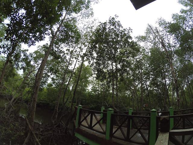 Jalan setapak Hutan Mangrove Langsa