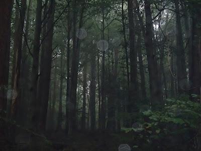 grzyby we wrześniu, grzyby 2016, grzyby w okolicy Krakowa, grzyby po deszczu, grzyby w czasie suszy, siedzuń sosnowy, szmaciak gałęzisty, Sparassis crispa, podgrzybek brunatny Boletus badius, borowik ceglastopory boletus luridoformis, borowik szlachetny Boletus edulis, muchomor czerwieniejący Amanita rubescens