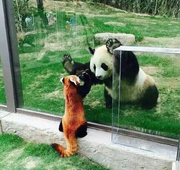 Funny animals of the week - 10 June 2016, cute animal photo, funny animal images, animal pic