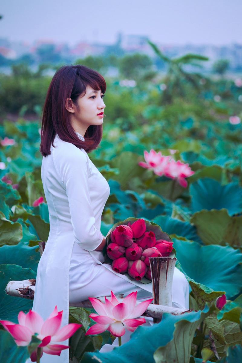 Lotus Flowers West Lake Pink Lotus Lotus In West Lake A Hanoi