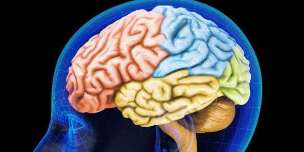 Vitamin untuk Daya Ingat Otak