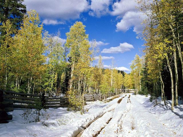 Winter achtergrond met een pad door een bos in de winter