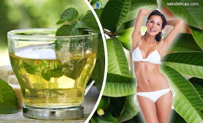 Comment préparer du thé en feuilles de goyave pour perdre du poids