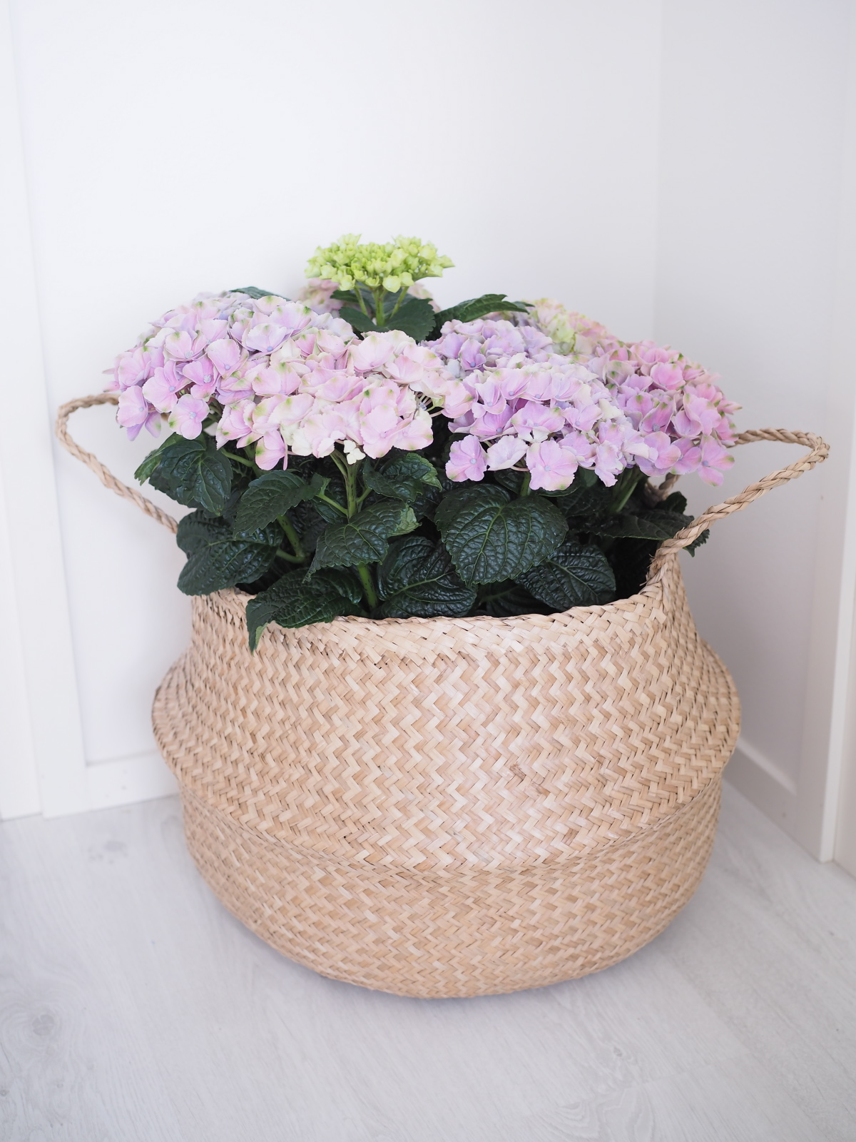 placefordreams.hortensia.1.jpg