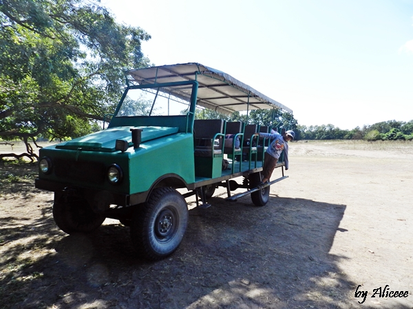 safari-in-delta-dunarii