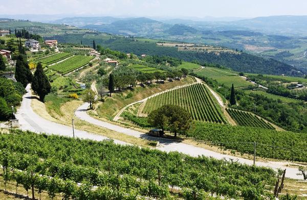 Visita a Verona e Amarone