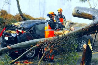 Quand un arbre tombe