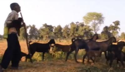 Penggembala kambing yang tidak prnah kehilangan ternaknya.