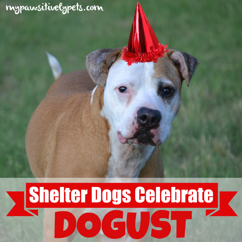 Shelter Dogs Celebrate Birthdays for DOGust with a 1-800