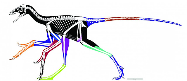 Palaeontologist reconstructs feathered dinosaurs in the flesh with new technology