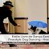 Estilo Livre de Dança Canina - Freestyle Dog Dancing - Heelwrok