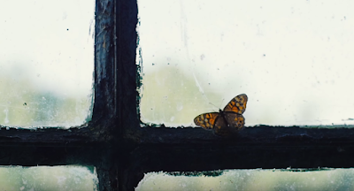 Η πεταλούδα στο τζάμι. Να Σταθώ στα Πόδια μου