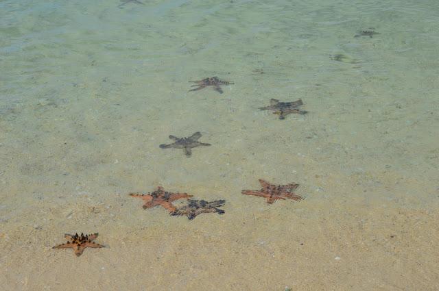 Marine Life Magalawa Island
