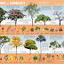 Cartaz produzido por IBRAM representa 12 árvores do cerrado