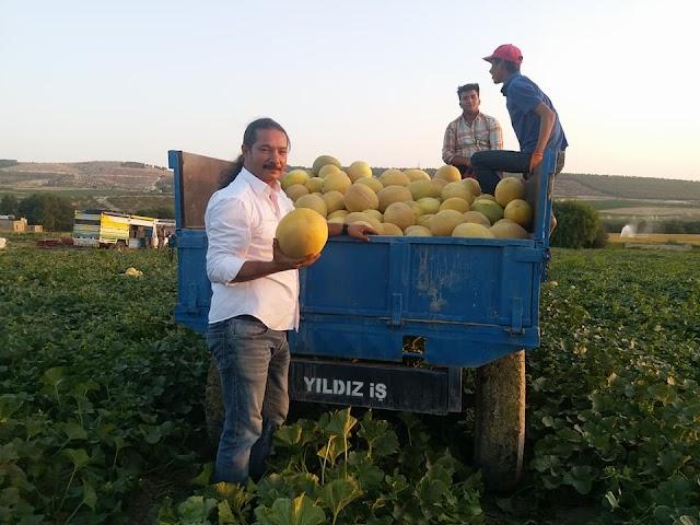 Yazar: Tarımda üretime yönelik adımlar atılmalı