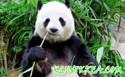 Manfaat Tunas Bambu (Rebung) Untuk Menjaga Hidup Sehat