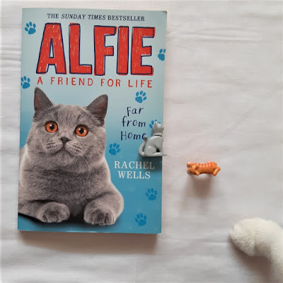 alfie-friend-for-life-far-from-home