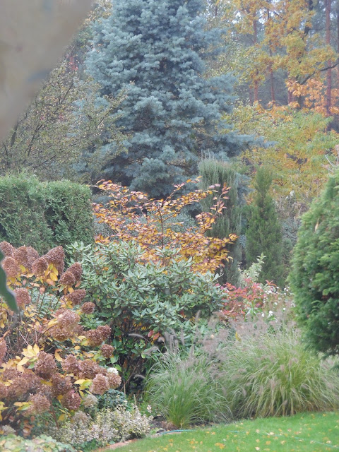 hortensje i trawy jesienią