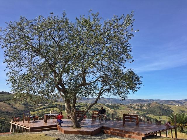 vinícola em Amparo