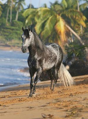 imagenes de caballos en la playa