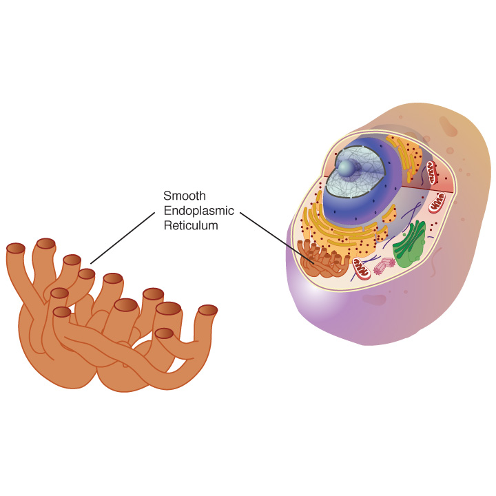 AS Biology OCR: Cell Structure and Organelles