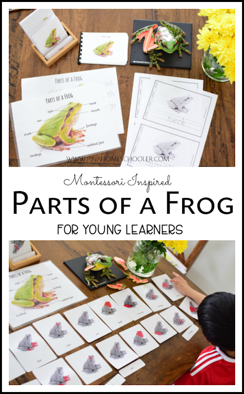 Parts of a Frog Learning Materials for Kids