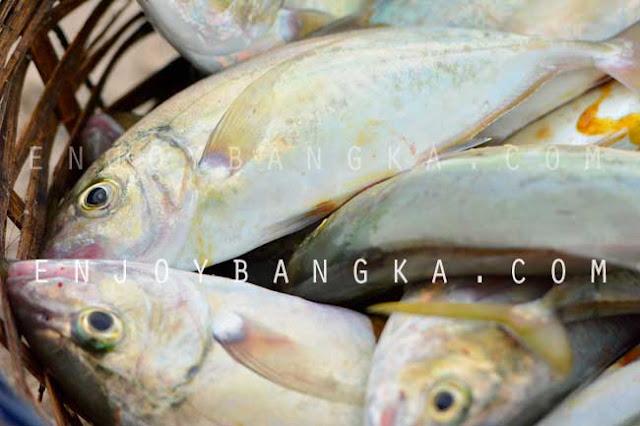 ikan khas pulau bangka desa rebo