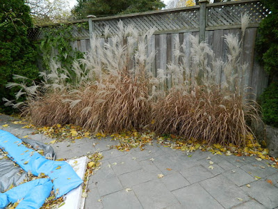 Bedford Park Toronto Fall Cleanup Before by Paul Jung Gardening Services--a Toronto Gardening Company