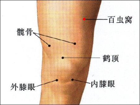 百蟲窩穴位 | 百蟲窩穴痛位置 - 穴道按摩經絡圖解 | Source:zhongyibaike.com