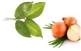bahan alami untuk obat herbal osteoporosis