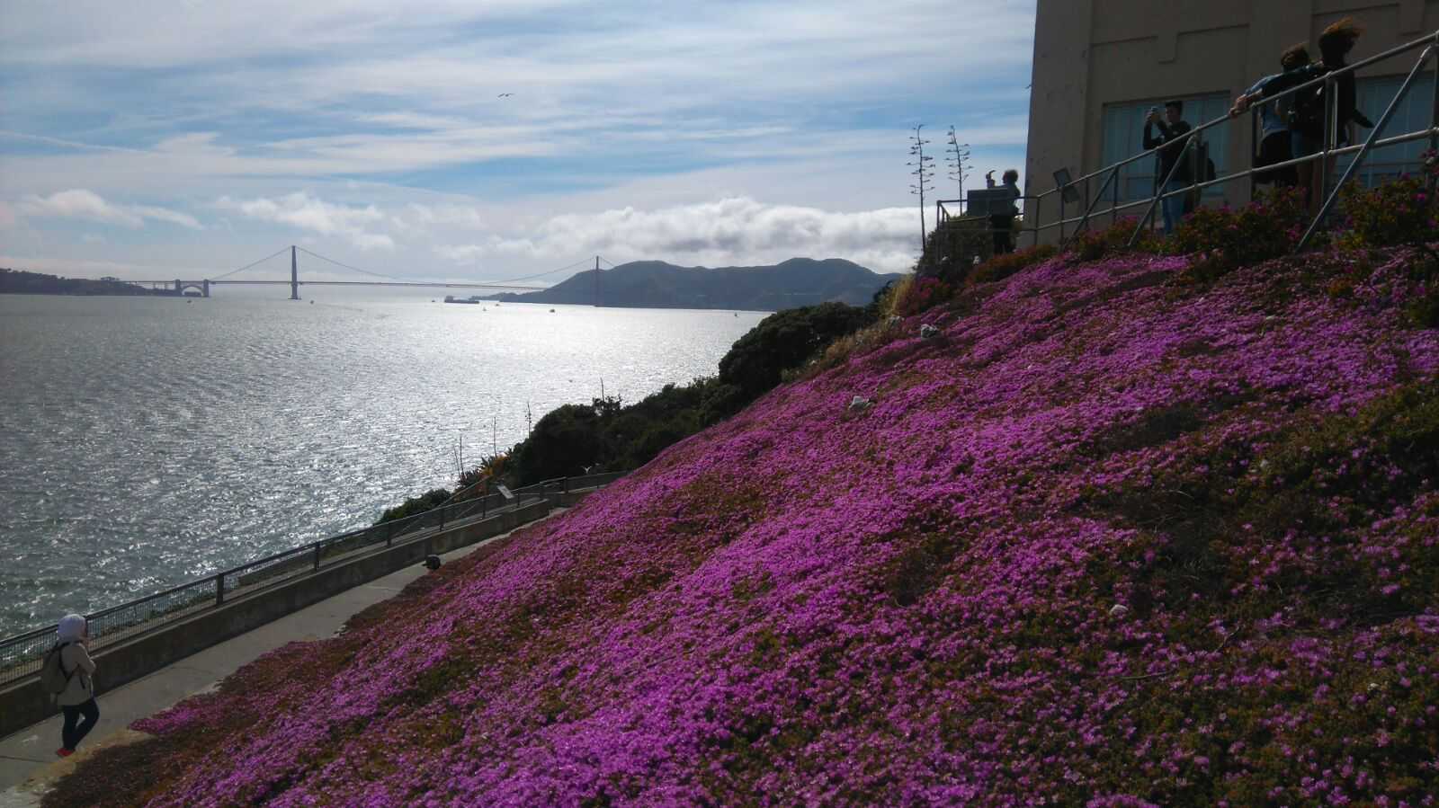 Beautiful wild flowers of Alcatraz Island San Francisco