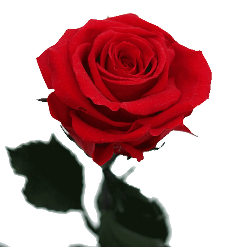 Stylish Wallpaper Heart Single Rose Wallpapers Walls Hub