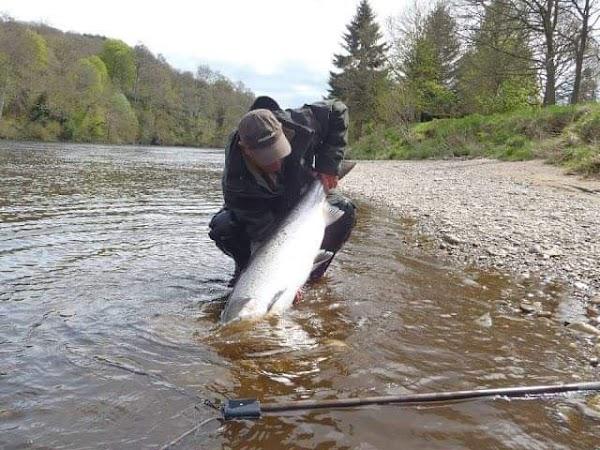 Desaparece el salmon en rios de Escocia , culpan al calentamiento global.