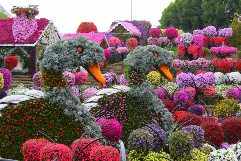 Blooming Daisy Duck in Miracle Garden