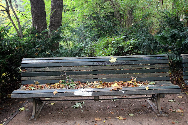 Autumn colours. Foliage. Bench