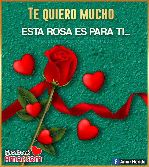 imágenes de rosas para amor