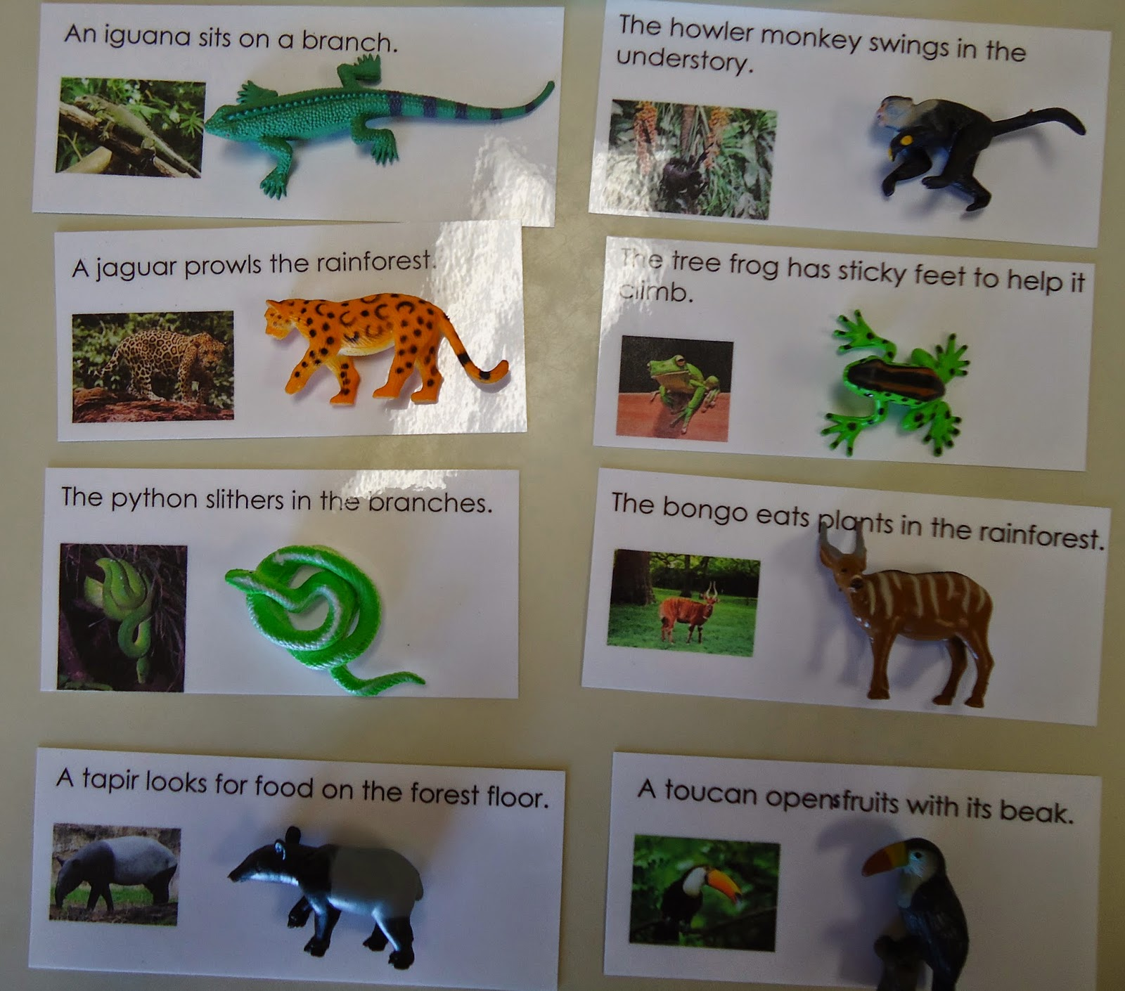 To The Lesson Reading Sentences Animals Of South America