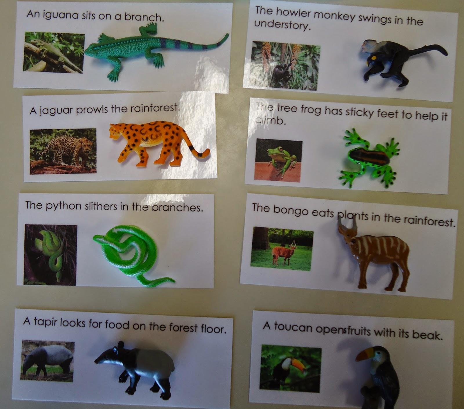 Reading Sentences Animals Of South America